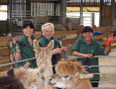 Our shearing team